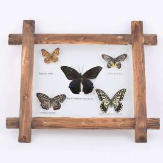 Картина бабочки под стеклом деревянная рамка 31х36 см