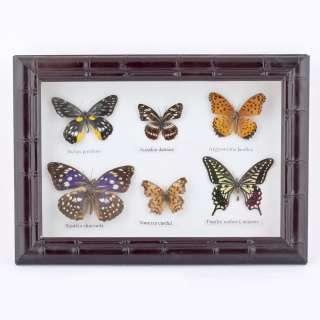 Картина бабочки под стеклом рельефная рамка 23 х 30 см