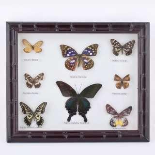 картина с бабочками в темно-коричн. рельефной рамке, 29х34