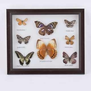 картина с бабочками в темно-коричневой рамке, 30х35
